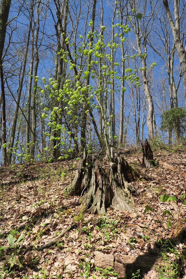 Appalachian Trail -- 4,220'