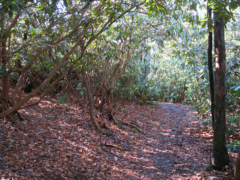 When not following the lakeshore the trail is usually surrounded by rhododendrons.