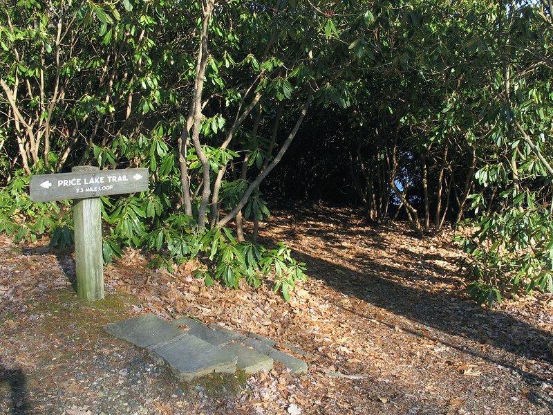 After the campground the trail drops back into the rhododendron.