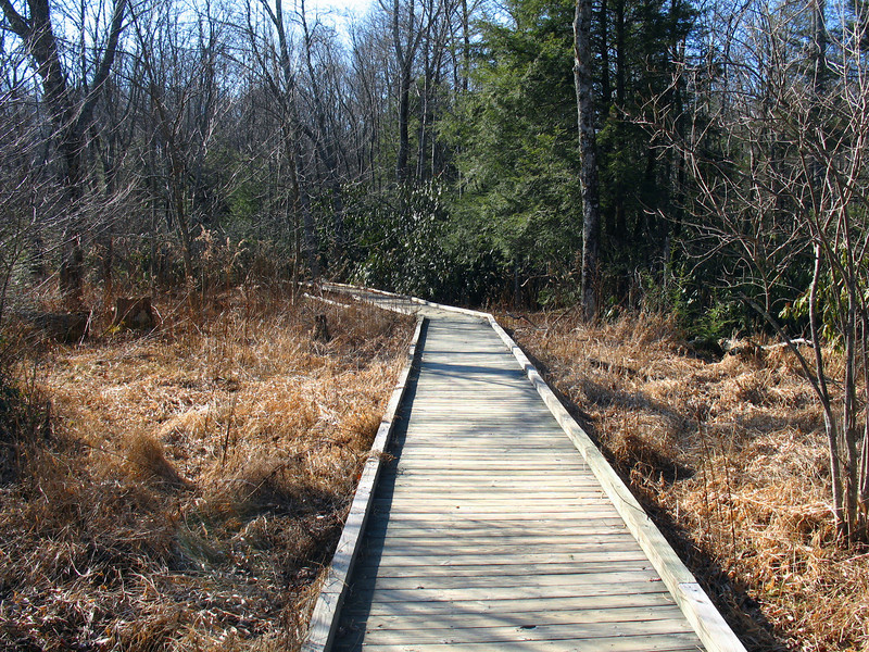 The trail follows a convenient boardwalk across the marshes near Cold Prong.