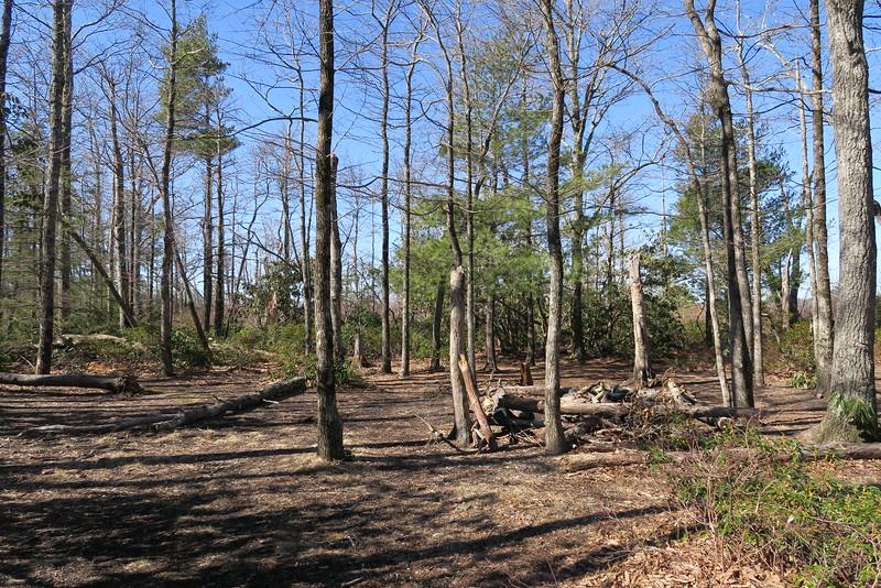 Shortoff Mountain Trail - 3,000'