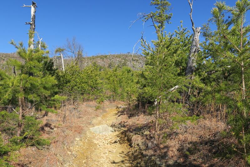 Shortoff Mountain Trail - 1,920'