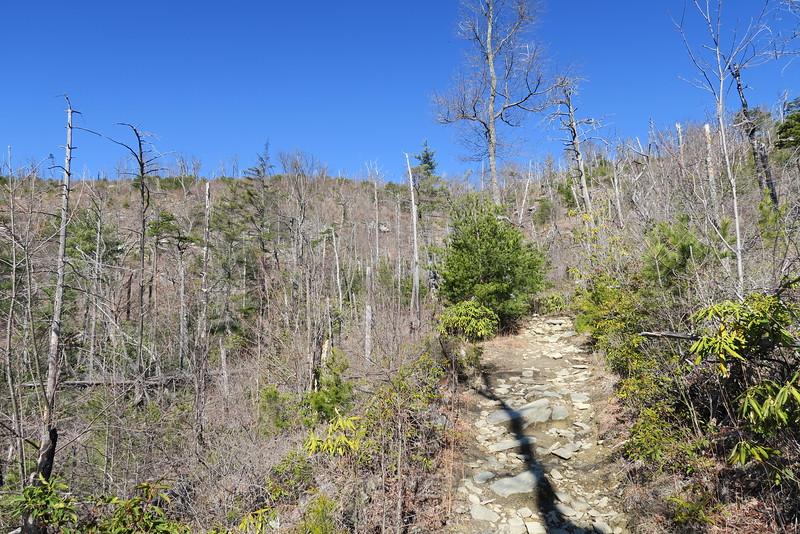 Shortoff Mountain Trail - 2,240'