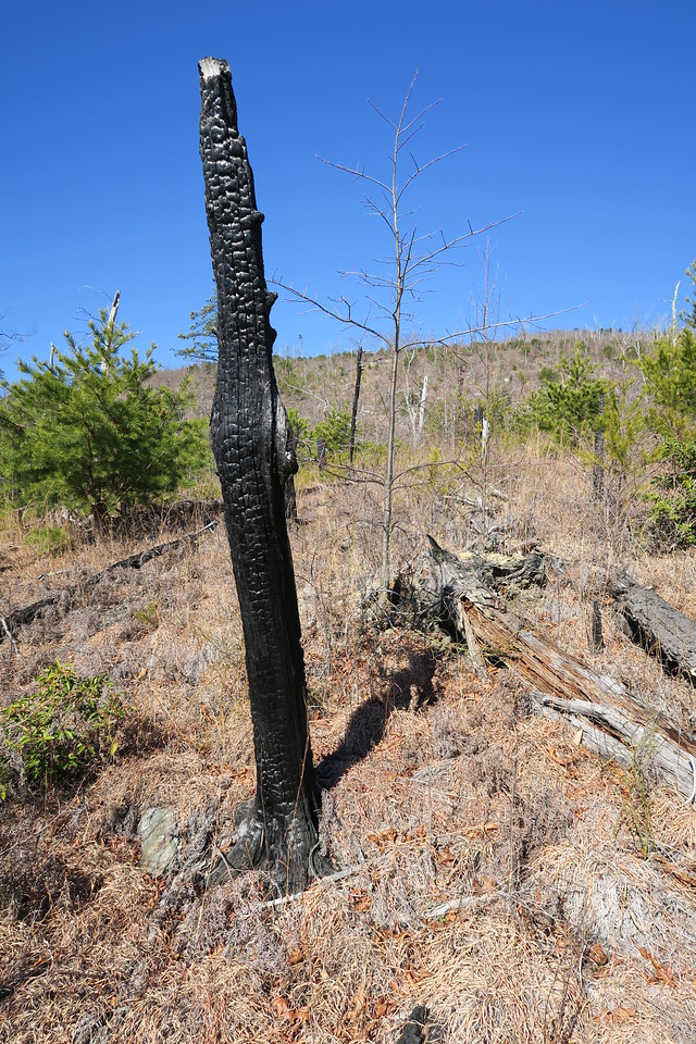 Shortoff Mountain Trail - 2,150'