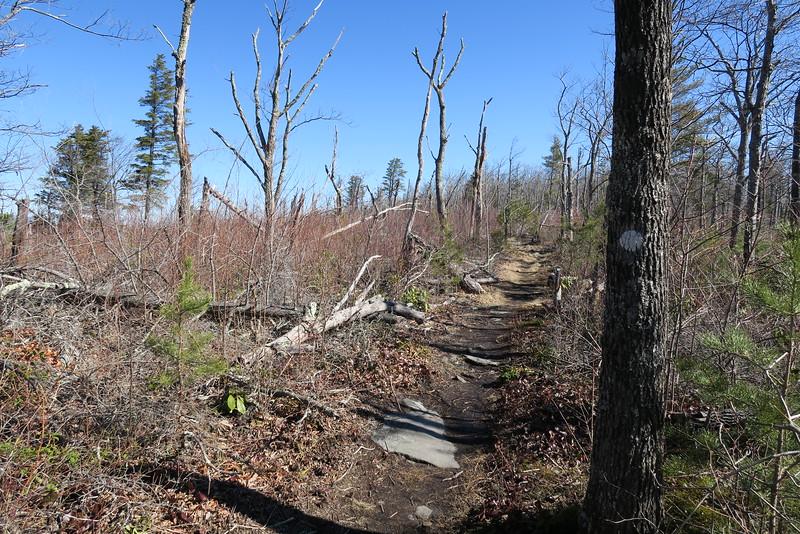 Shortoff Mountain Trail - 2,950'