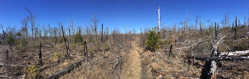 Shortoff Mountain Trail - 2,980'