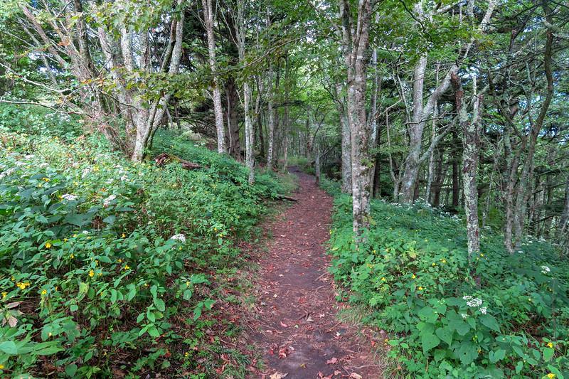 Mountains-to-Sea Trail -- 4,910'