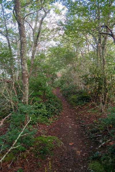 Snowball Trail -- 5,050'