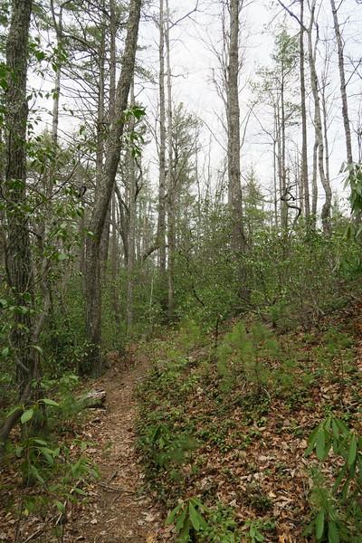 Harper Creek Trail