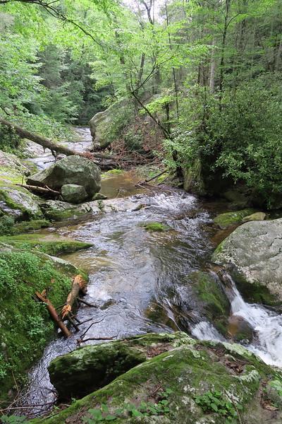 Steele's Creek