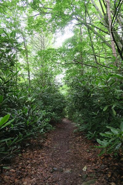 Steels Creek Trail