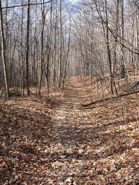 Pretty woodlands...