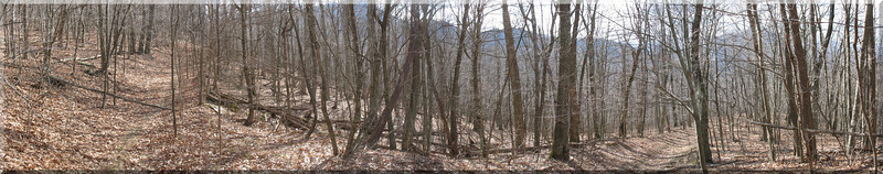 A panorama shot showing a typical section of trail on the way up Three Top.