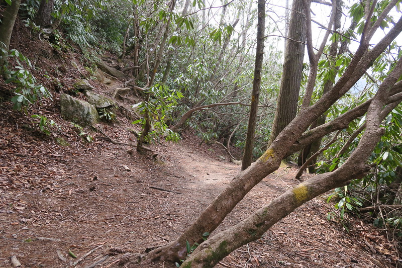 Lost Cove Trail / M.S.T. - Middle Falls Spur
