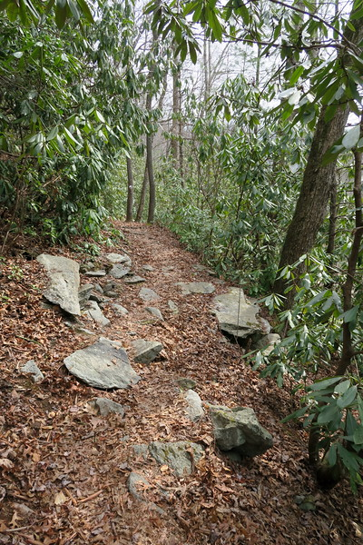 Lost Cove Trail / M.S.T.