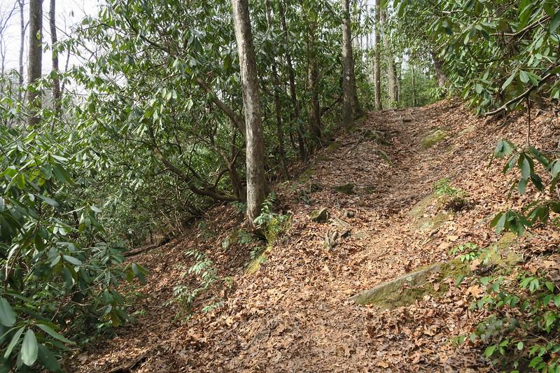 Lost Cove Trail / M.S.T. - Upper Falls Spur Path