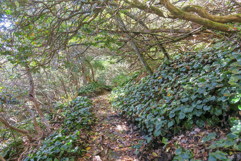 Art Loeb Trail -- 5,650'