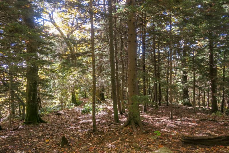 Art Loeb Trail -- 5,050'