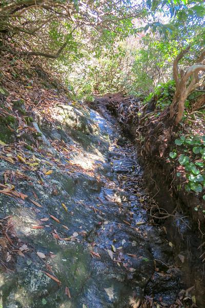 Art Loeb Trail -- 5,750'
