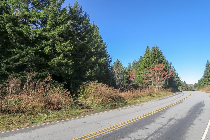 Black Balsam Road Trailhead (Art Loeb Trail/MST) -- 5,900'
