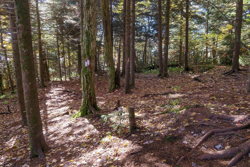 Art Loeb Trail -- 5,400'
