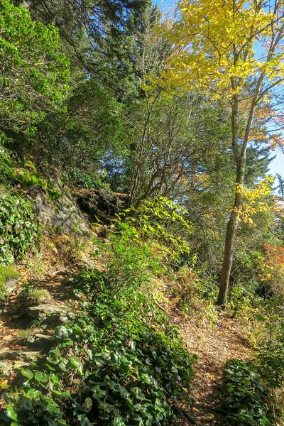 Art Loeb Trail -- 5,700'