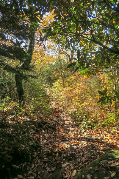 Art Loeb Trail -- 5,000'