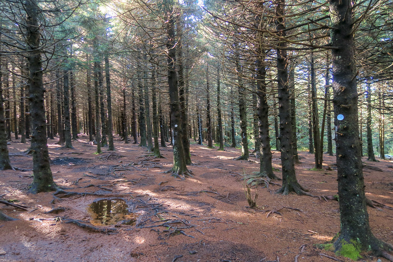 Art Loeb/Mountains-to-Sea Trail -- 5,910'