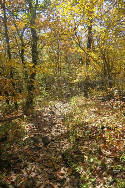 Art Loeb Trail -- 5,150'