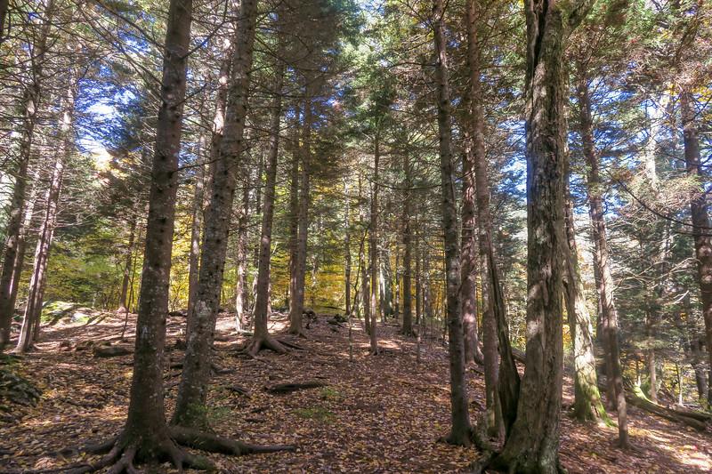 Art Loeb Trail -- 5,350'