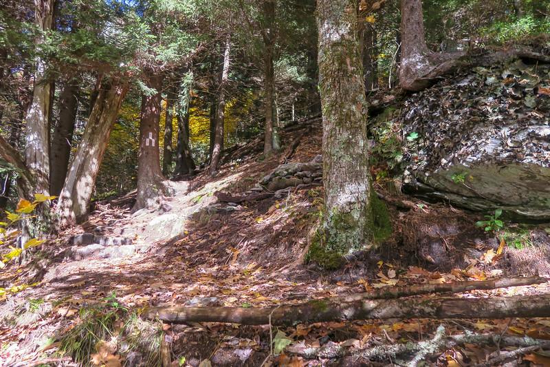 Art Loeb Trail -- 5,560'