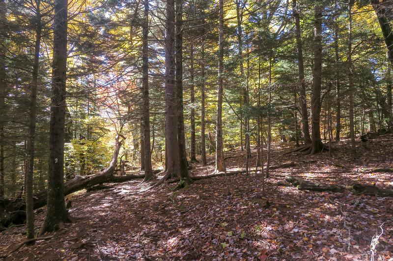 Art Loeb Trail -- 5,200'