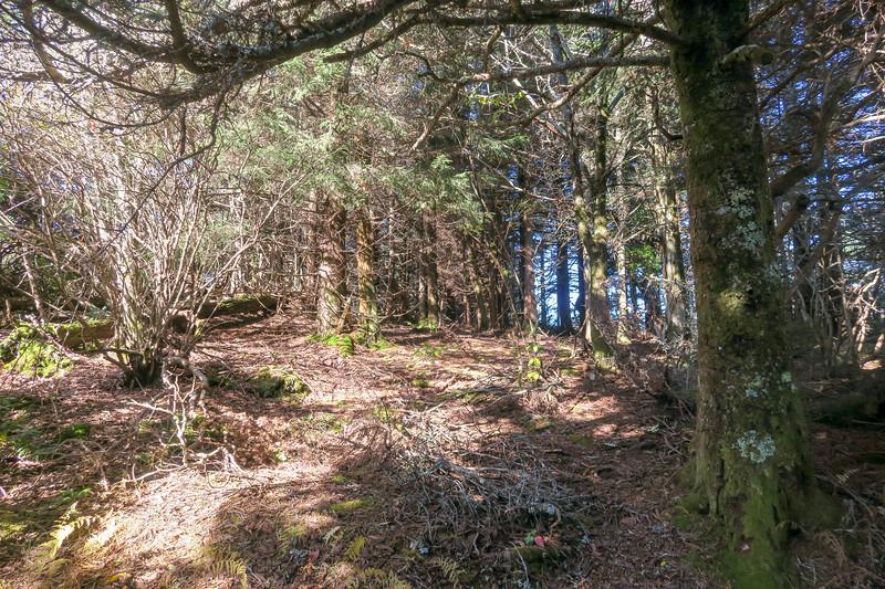 Art Loeb/Mountains-to-Sea Trail @ Silvermine Bald -- 5,980'