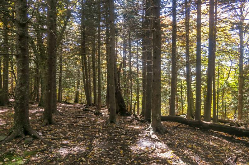 Art Loeb Trail -- 5,250'