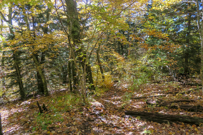 Art Loeb Trail -- 5,100'