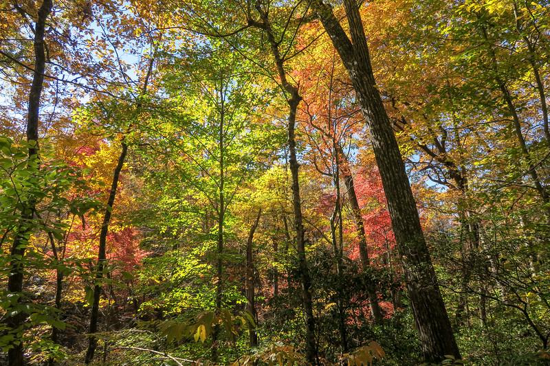 Art Loeb Trail @ Neil Gap -- 2,850'
