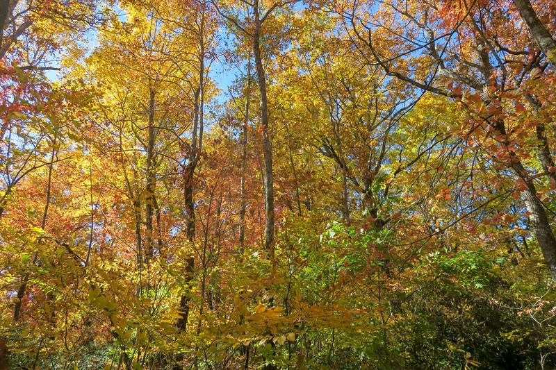 Art Loeb Trail -- 3,040'