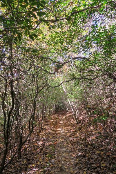 North Slope Loop Trail -- 2,450'