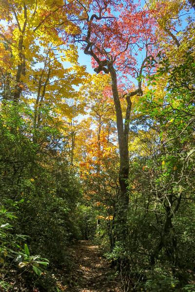 Art Loeb Trail -- 3,000'