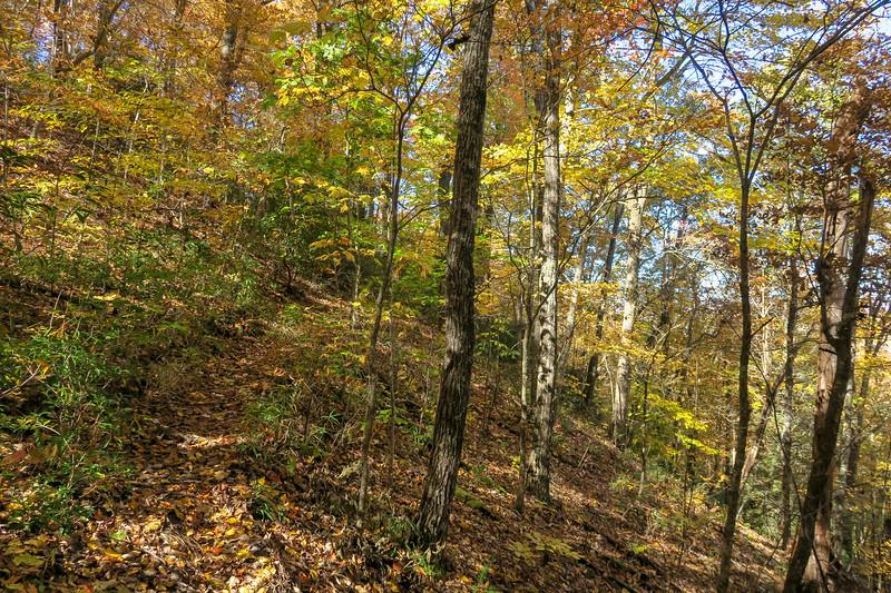 Art Loeb Trail -- 3,070'
