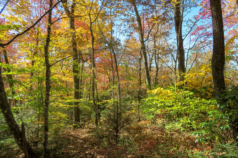 Art Loeb Trail -- 2,950'