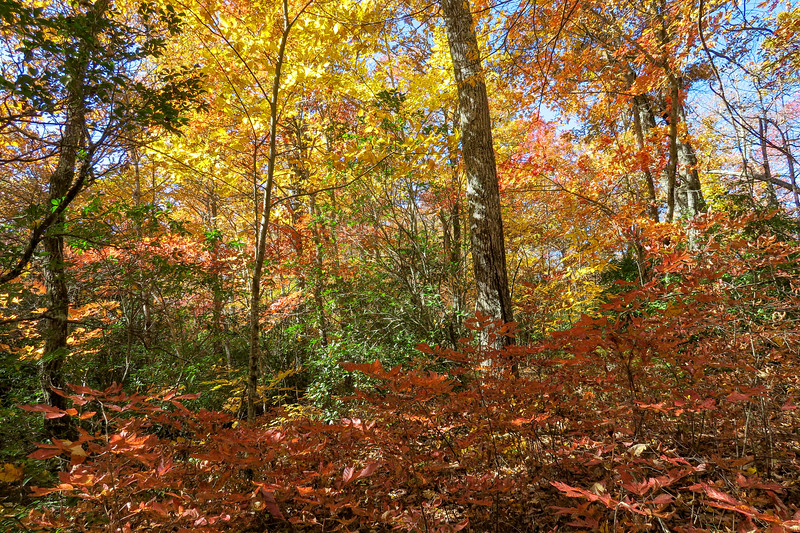 Art Loeb Trail -- 3,100'