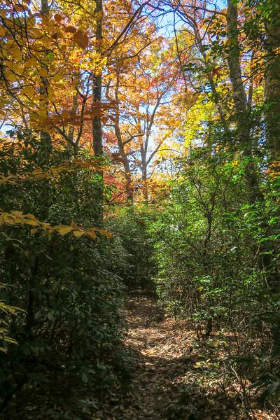 Art Loeb Trail -- 3,050'
