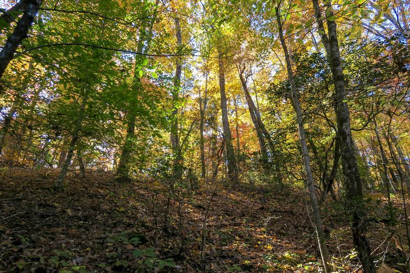 Art Loeb Trail @ Stony Knob -- 3,090'