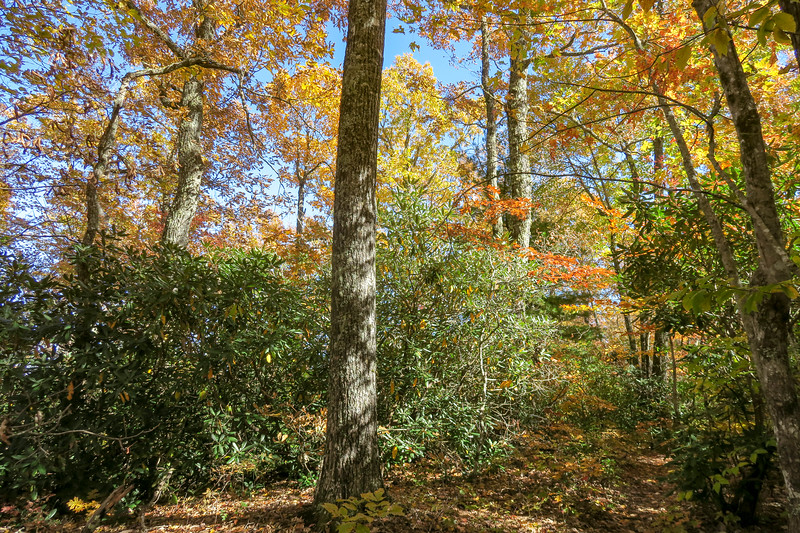 Art Loeb Trail -- 3,080'