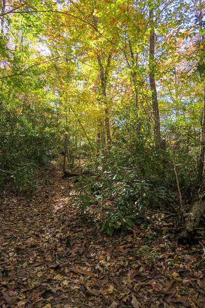 Art Loeb Trail -- 2,900'