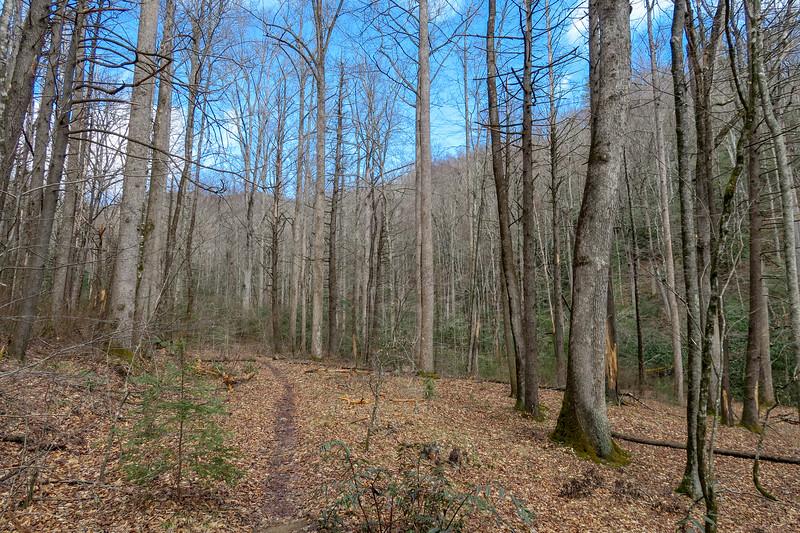 Avery Creek Trail -- 2,650'