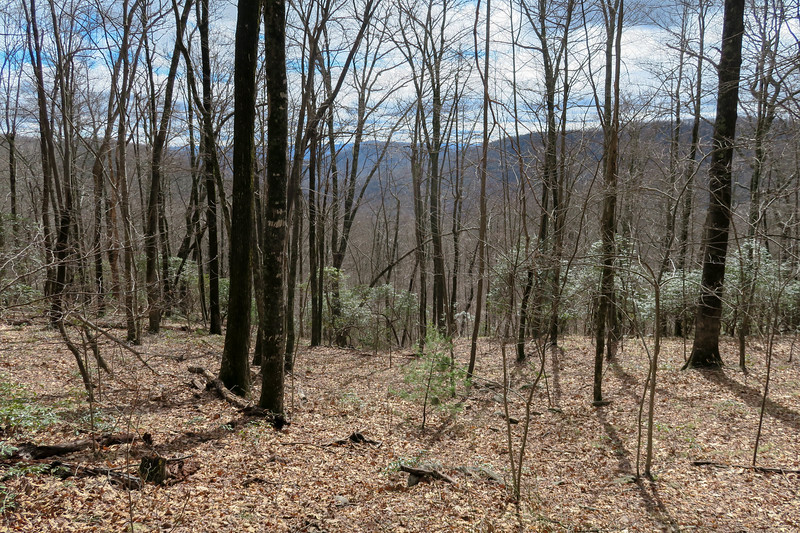 Avery Creek Trail -- 3,460'