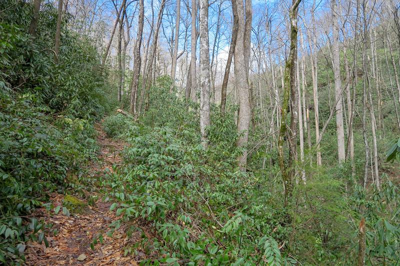 Avery Creek Trail -- 2,700'