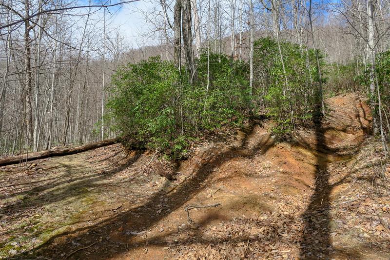 Avery Creek Trail -- 3,250'